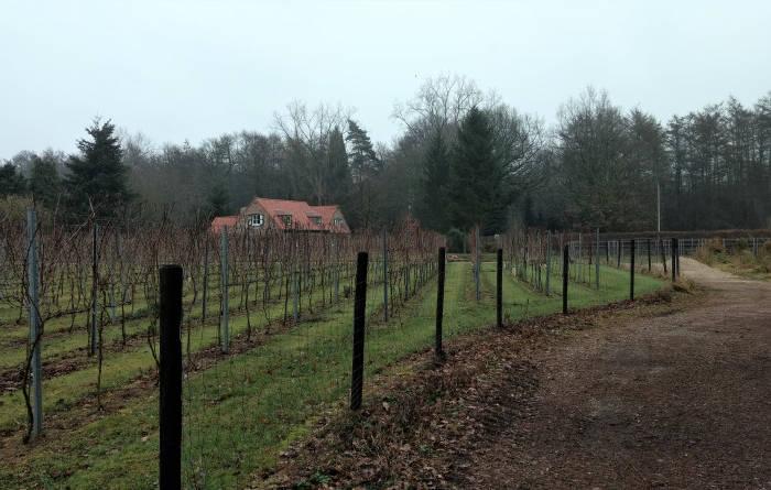 wijngaard vigna wijnegem